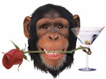 chimprose